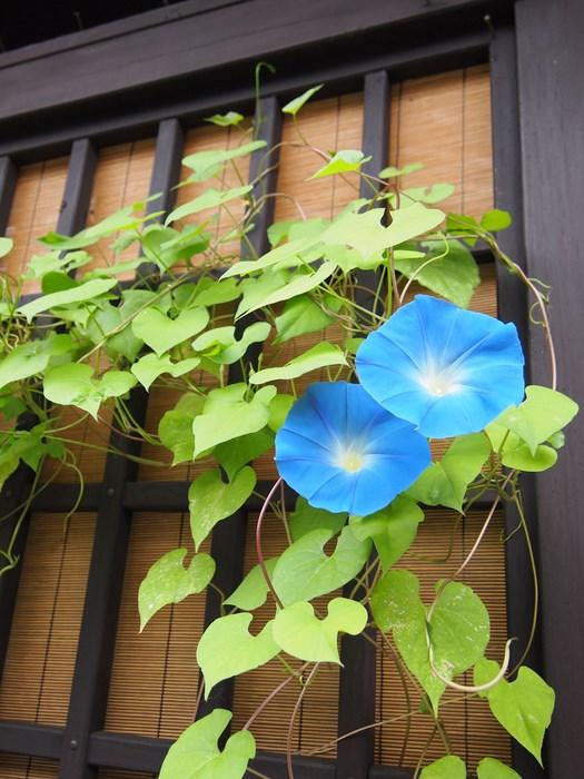 古民家に似合う花